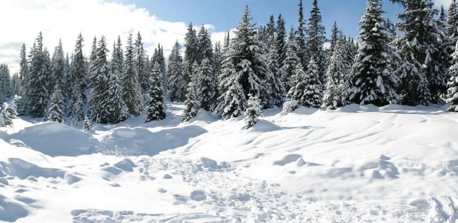 Libri per conoscere la neve
