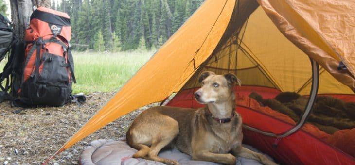In tenda con il cane