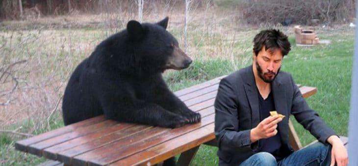 Incontro con gli orsi