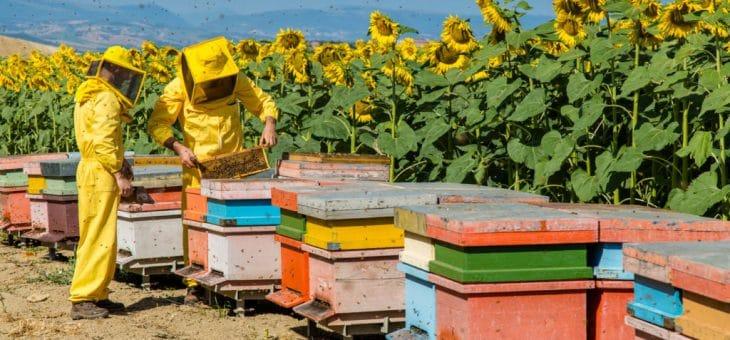 Libri sull'apicoltura